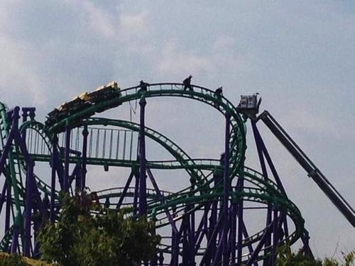 California screamin roller coaster front row hd pov 1080p best quality at disneys california adventure