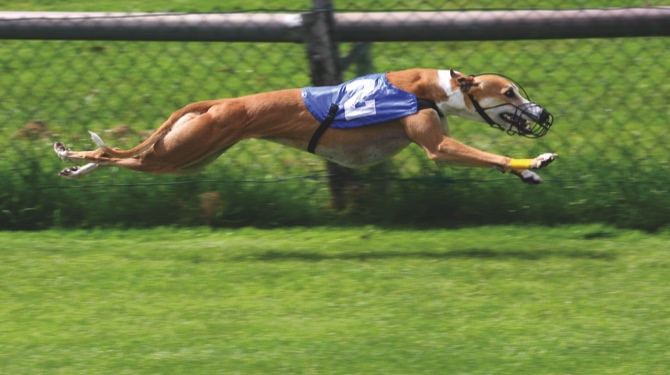 'We will continue to fight' ban: Greyhound industry