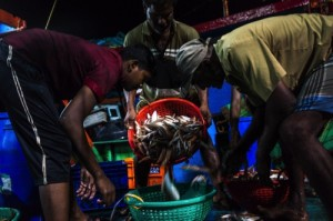 Fishing Communities As Growth Expected To Quicken