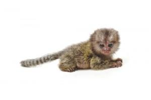 monkey-001