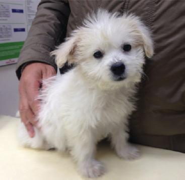 white-dog