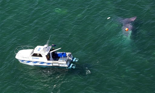 A police boat circles a crashed plane in Lake Taupo in New Zealand Wednesday, Jan. 7, 2015. All 13 people aboard a New Zealand skydiving plane that suffered an apparent engine failure managed to leap out in parachutes moments before the plane plunged into a lake, according to authorities.