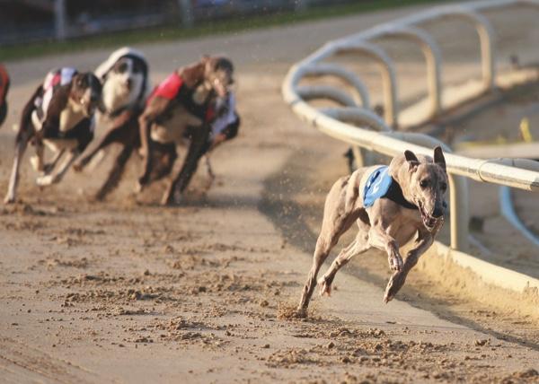 1-greyhound