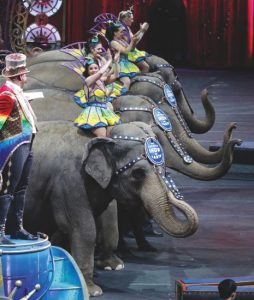 Asian elephants are seen on stage during a final farewell as they perform for the final time in the Ringling Bros. and Barnum & Bailey Circus