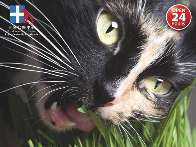 Cat-Eating-Grass.001