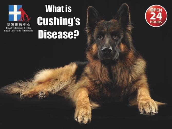 Cushings-Disease.001