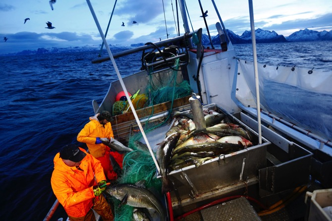 File photo of Jan Gunnar Johansen and Trond Dalgard as they fish for cod from the vessel Buaodden in the Norwegian Sea near Gryllefjord, northern Norway